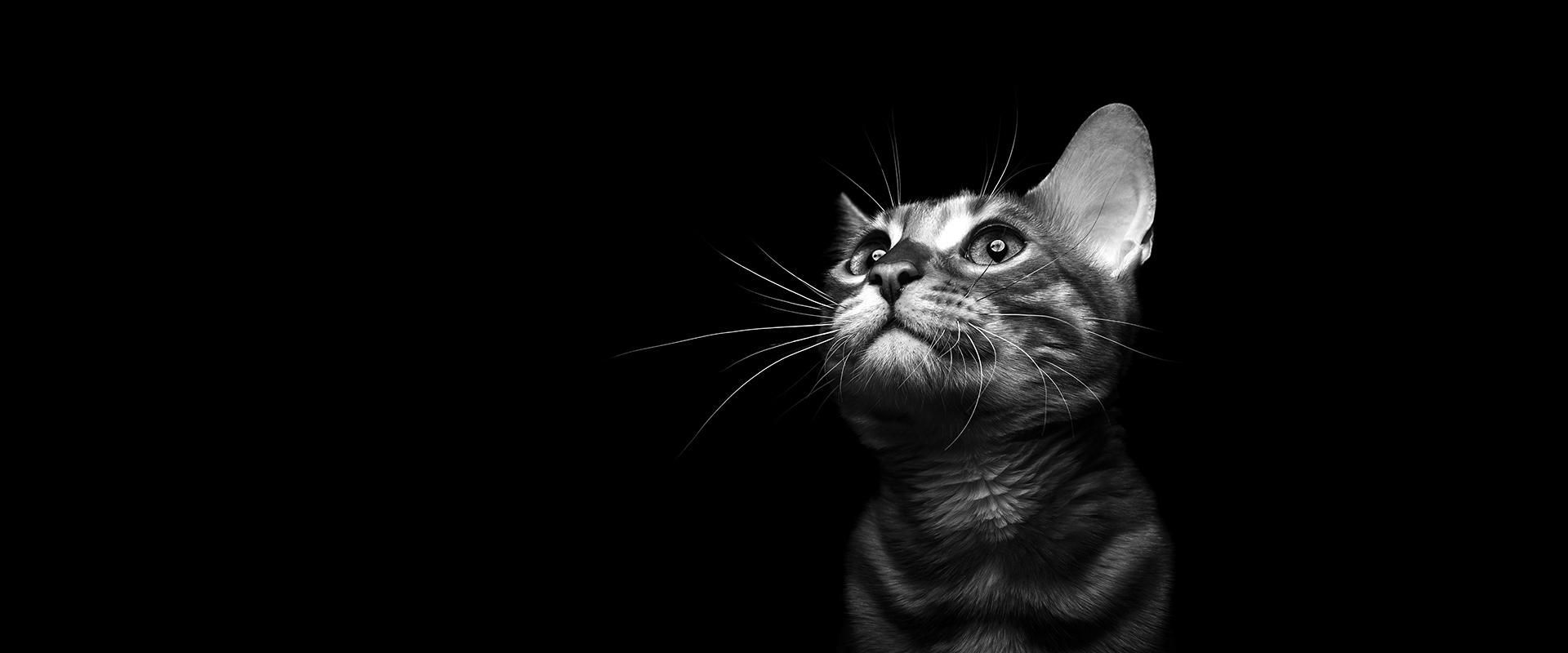 slider-cat