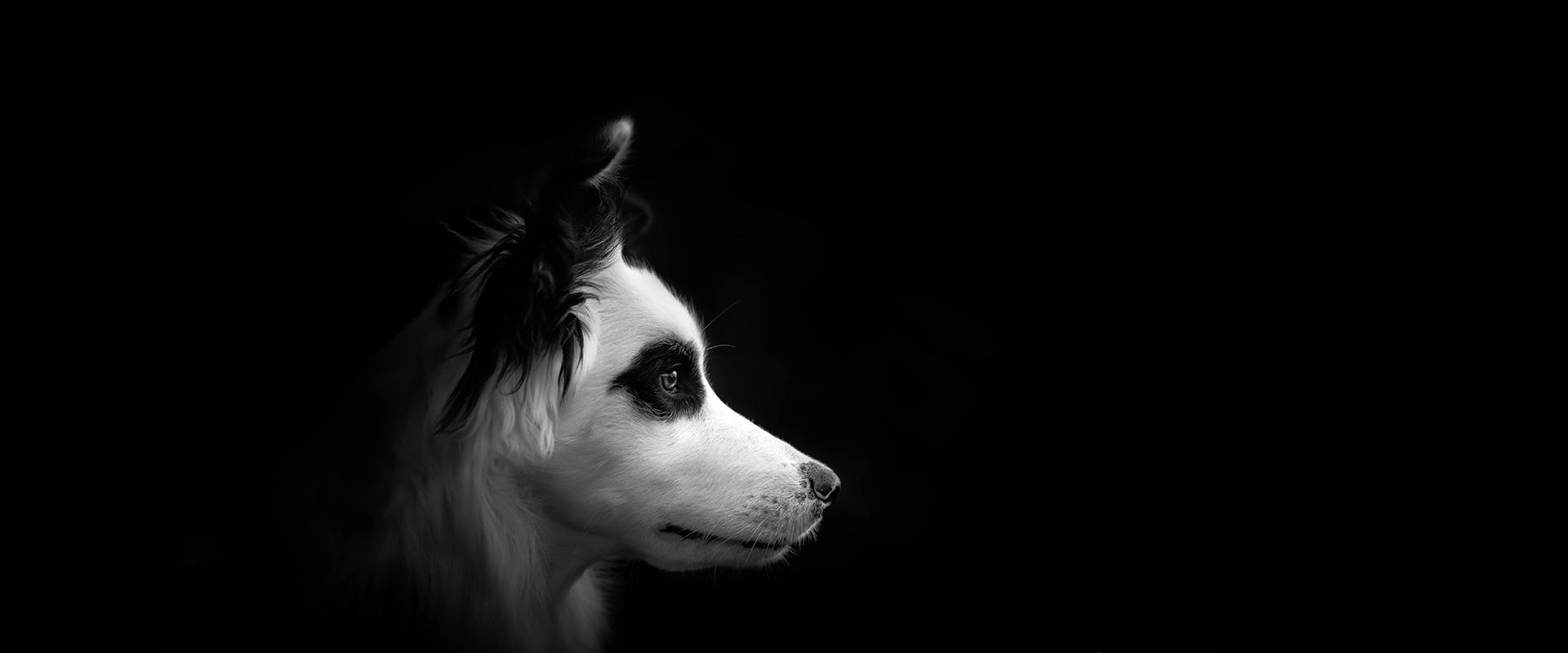 slider-dog